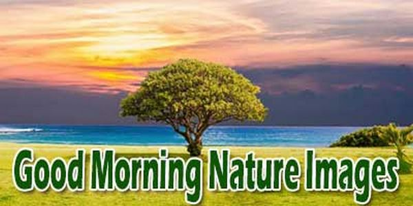 Good Morning Messages Good Morning Messages For Friends With Pictures
