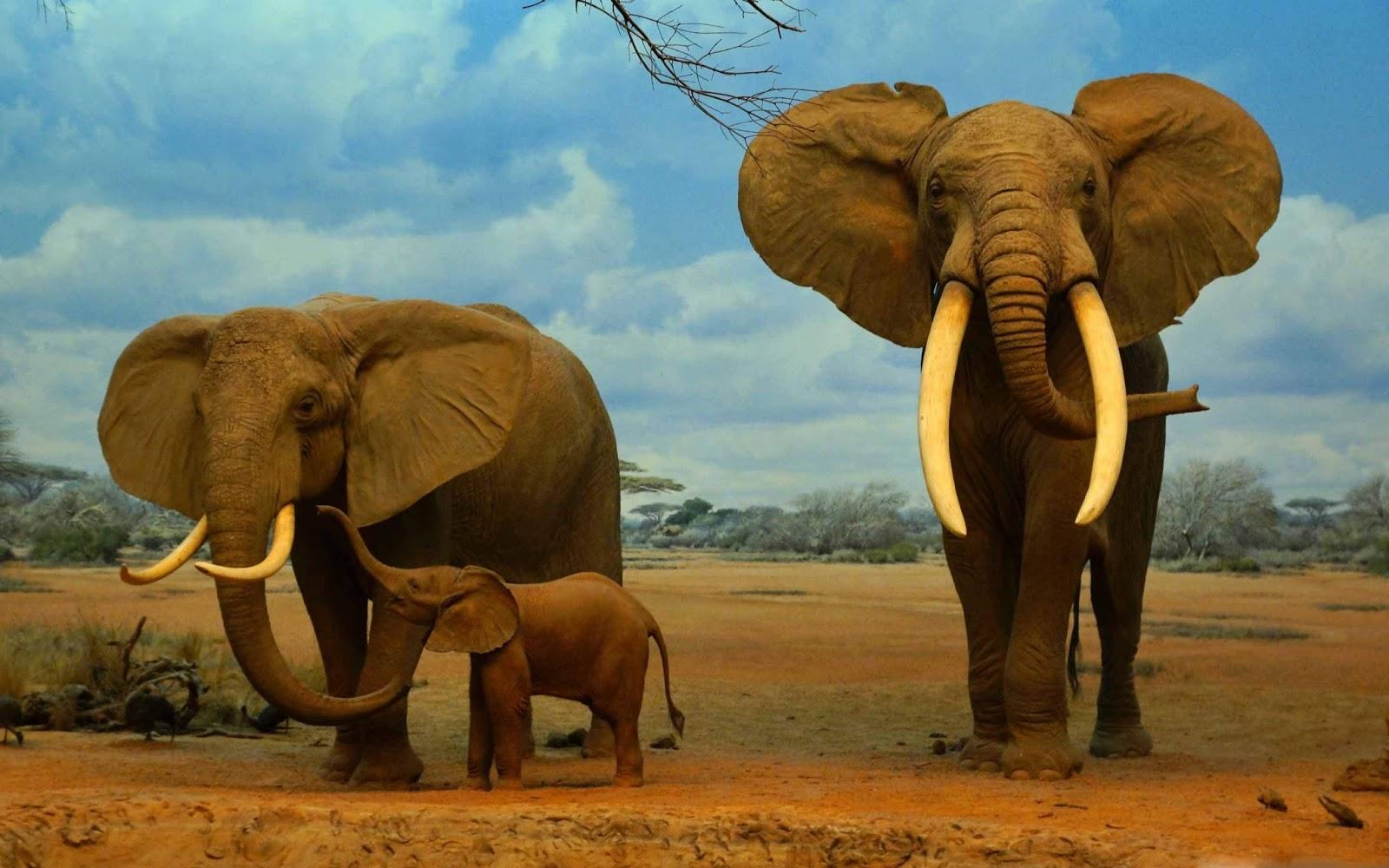 Ultra HD 4K Elephant Wallpaper Download - Free New ...