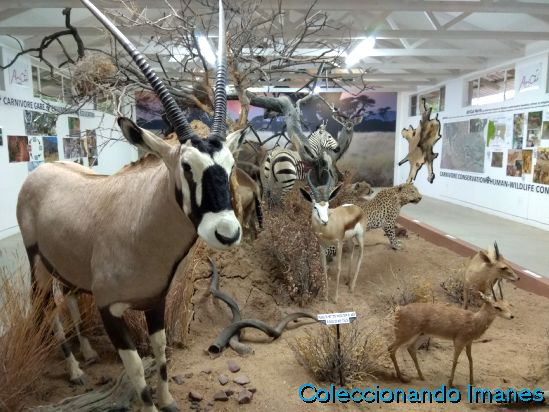 Namibia animales Okonjima