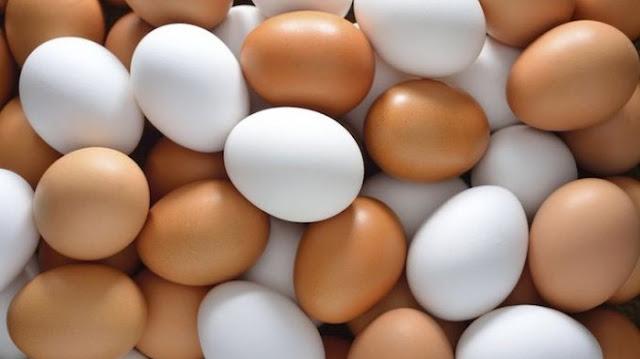Informasi Peluang Usaha Telur Ayam & Analisa Usahanya