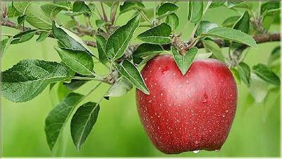 gambar buah apel lambang cinta