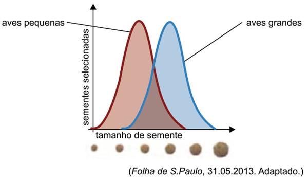 O gráfico mostra como aves pequenas e aves grandes selecionam sementes de diferentes tamanhos