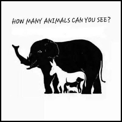 Now many animals can you see