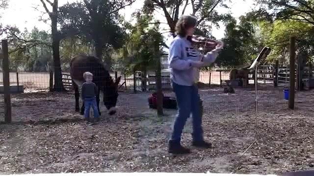 Kako danas svi pjevaju, poceli su i magarci :)
