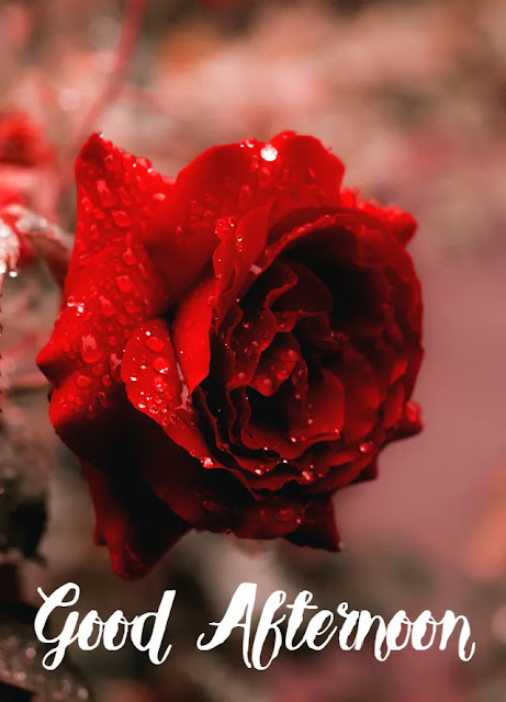 Good Afternoon Rose
