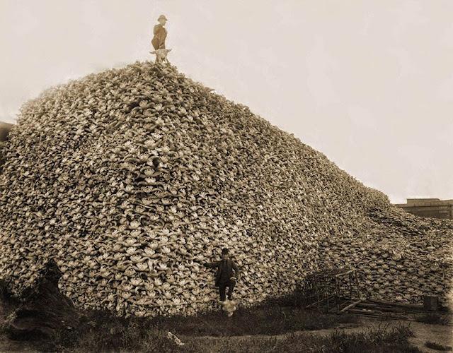 Montaña de cráneos de búfalos y bisontes, foto tomada en el año 1870. Fotos insólitas que se han tomado. Fotos curiosas.