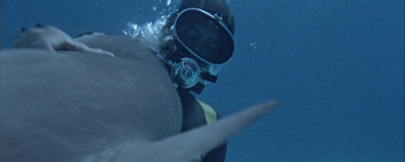shark 1969