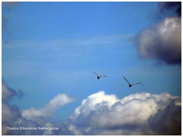 aves, migración por alimento o cambio de temperatura-Chacra Educativa Santa Lucía