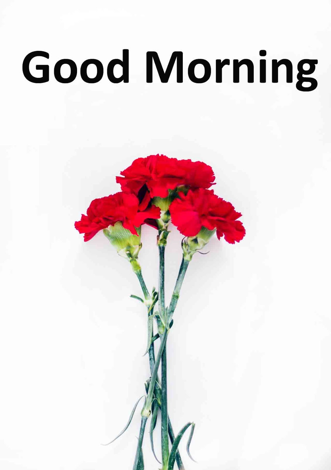 Latest Good Morning Images Wallpaper Photo Pics Hd Download For Whatsapp Beautiful Good Morning Quotes Pictures Photos Images Beautiful Good Morning Quotes Pictures