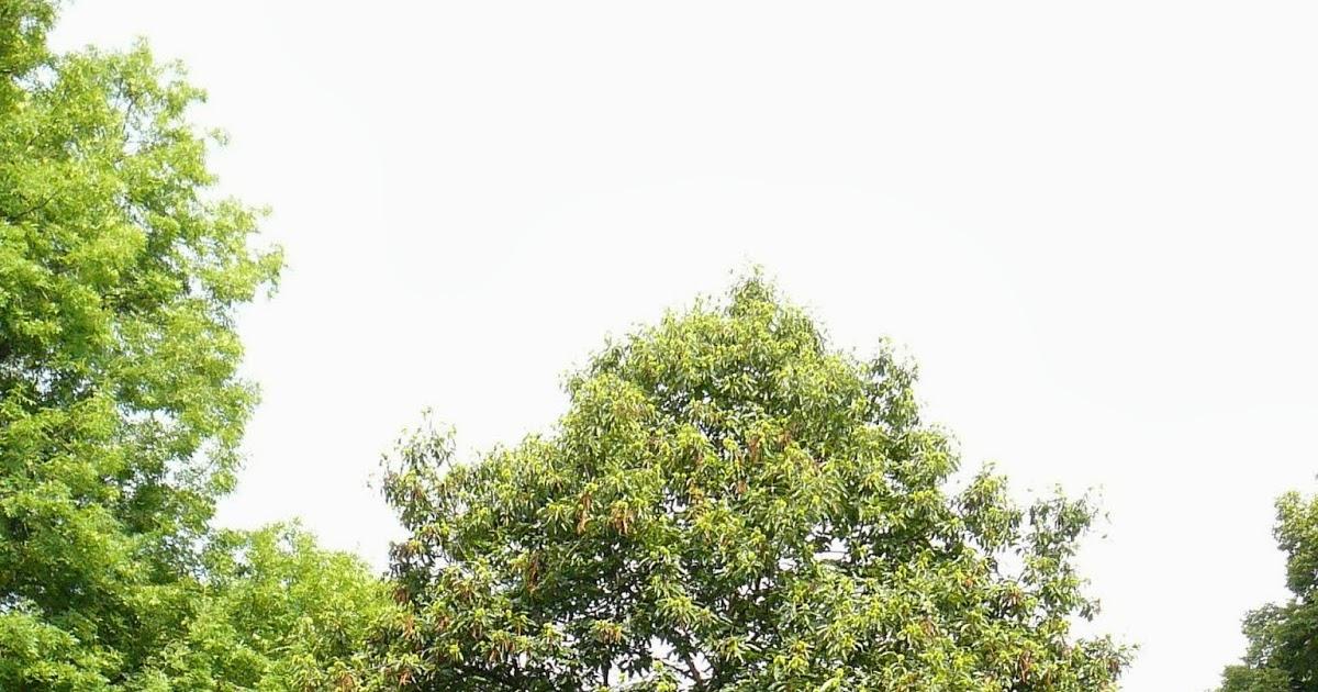 Le monde de Kitchi: Mein Freund, der Baum: Esskastanie