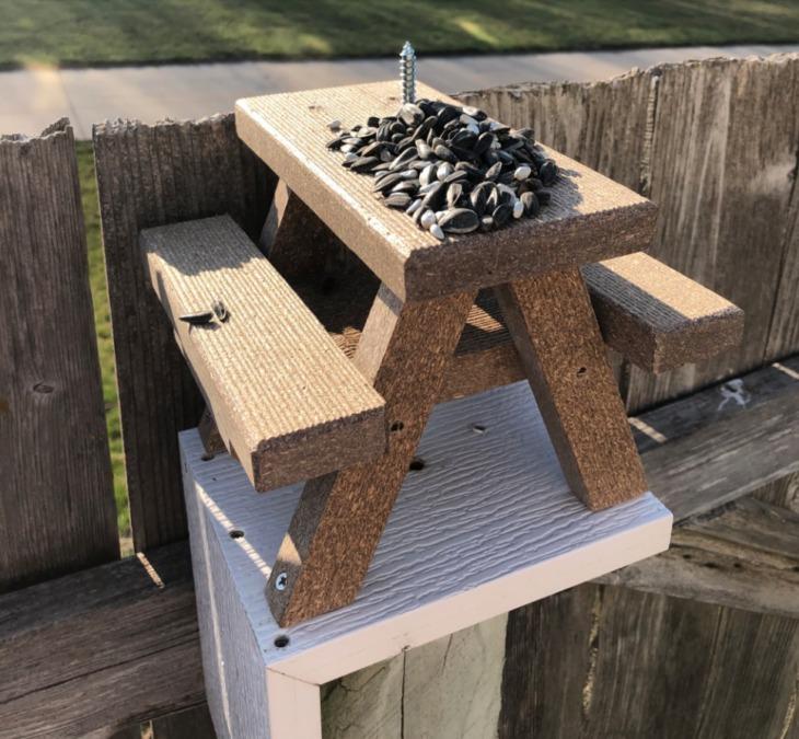 Construyó una mesa de jardín para que las ardillas coman en su patio y se hace viral
