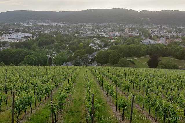 Petrisberg Vineyard Viewpoint Trier Places to see