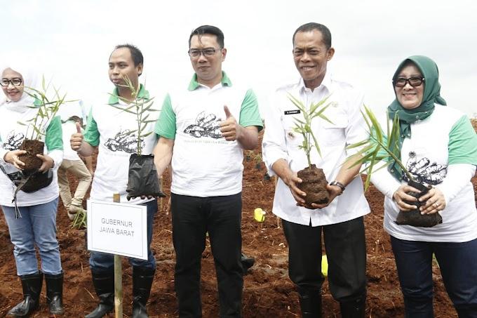 Gubernur Jabar Tanam Jahe Di Manyingsal Subang