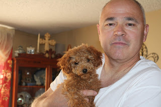 Pure breed Red Toy Poodle, Living From Glory To Glory Blog