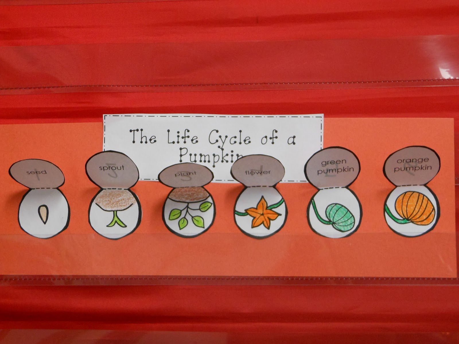 the following day they had to apply their schema of a pumpkin s life cycle and complete this little sequencing art activity  [ 1600 x 1200 Pixel ]