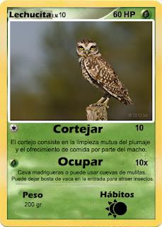 Cartas de Pokemon con Fauna uruguaya (Pradera) - Lechucita