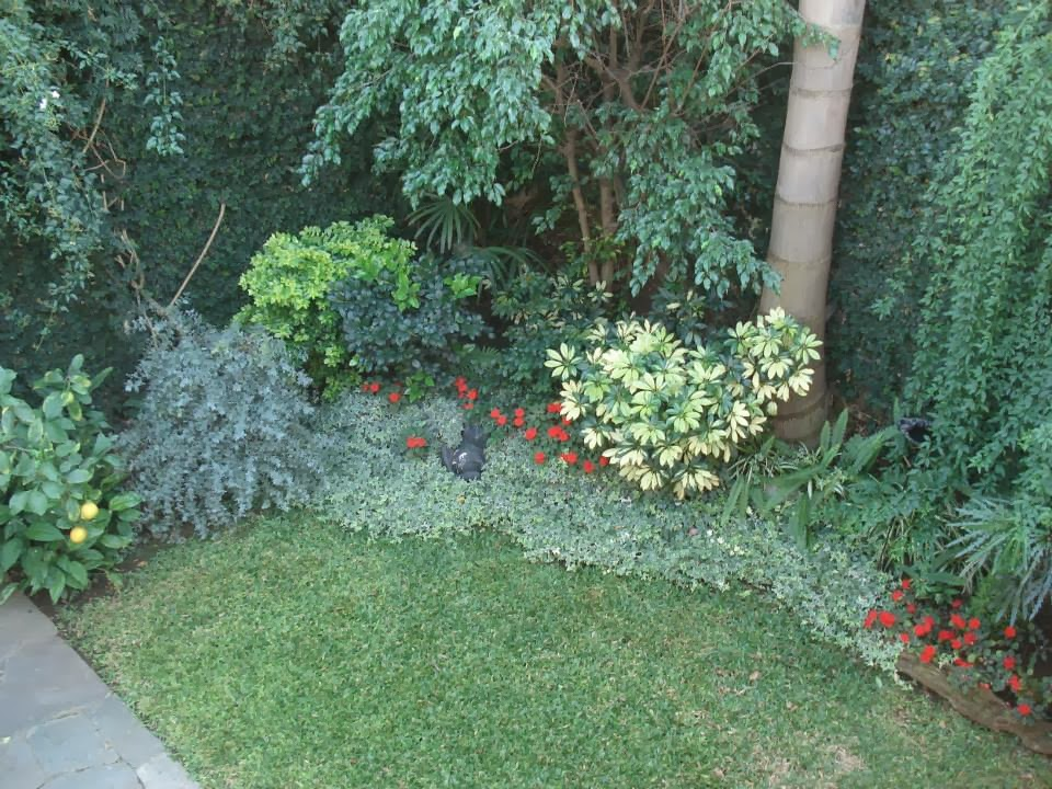 Rboles con buena sombra for Arboles jardin sombra