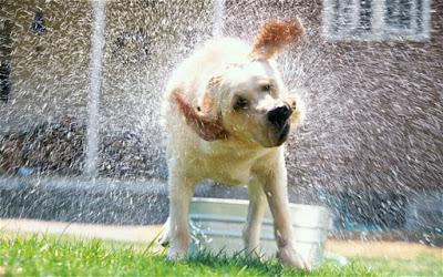 Pravilno kupanje pasa