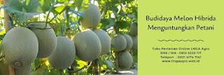 ph meter tanah, alat ukur, tanah asam, pengapuran, jual alat pertanian, toko pertanian, toko online, lmga agro