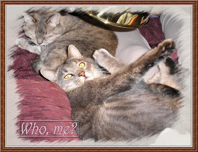 "Click image for your ""Not just another cat calendar!"" cat calendar."