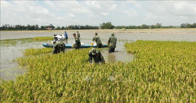 Tại sao Đồng Bằng Sông Cửu Long phải sống chung với lũ?