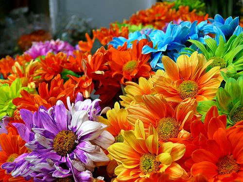 Il fiore nei proverbi