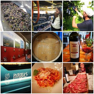 pagus wine tour