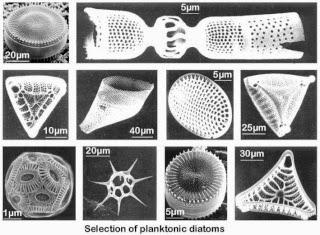 Diatomeas | Tierra de diatomeas