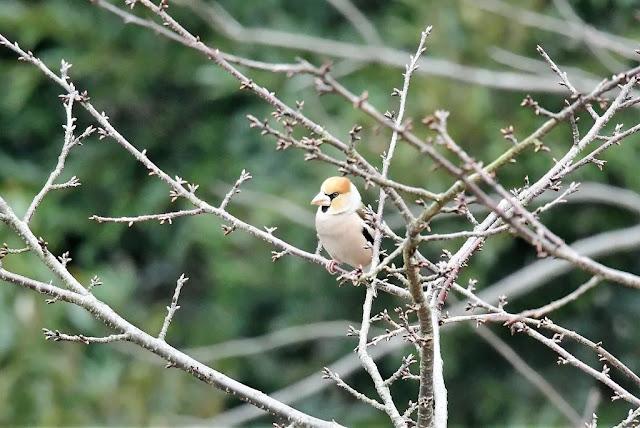 الطيور الزرقاء, الطيور الزرقاء Ruribitaki, صور, صور طيور زرقاء, Foto, Ruribitaki, Wallpapers Birds, خلفيات طيور,