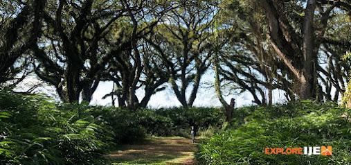 hutan trembesi de djawatan
