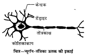 Ncert solutions class 10 science chapter 7 - niyantran avam samanvay