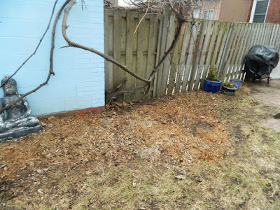 Spring Garden Cleanup After in The Junction by Paul Jung Gardening Services a Toronto Gardening Company