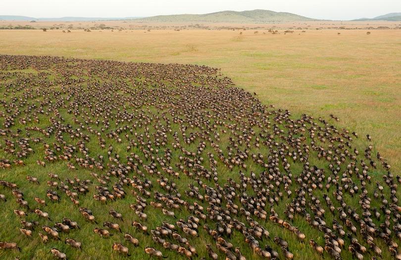 اجمل الحدائق الوطنية في تنزانيا