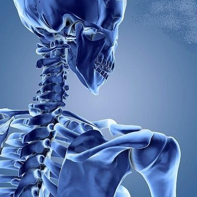 Sistem Gerak Tubuh Manusia