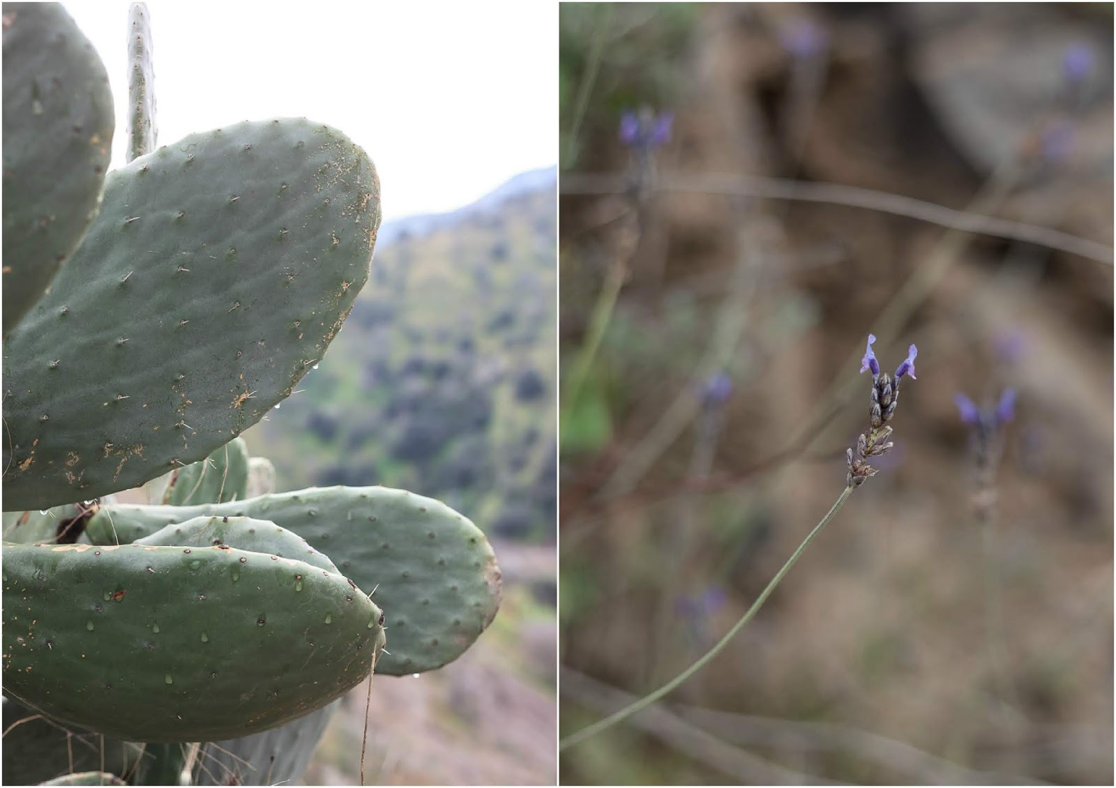 Details of Andalusian nature