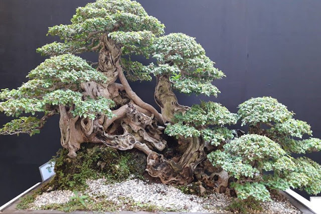 Philippine Bonsai Society