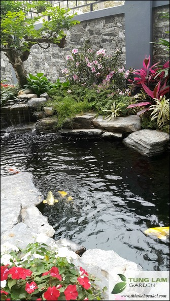 Thiết kế hồ cá koi đẹp, hồ cá koi sân vườn