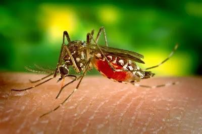 Demam berdarah, Malaria