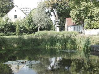 Dorfteich Wartenberg mit Goldfischen, Seerosen und dem Storchenpaar
