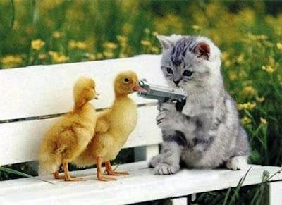 Wallpaper Lucu Kucing Menembak Dua Ekor Bebek