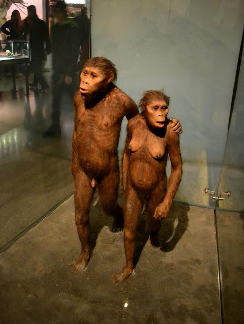 Американський музей природознавства, Нью-Йорк. (American Museum of Natural History)