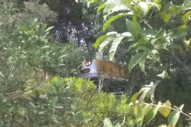 Kombi escolar capota e deixa 13 feridos em São João Batista do Glória, MG - (Foto: Corpo de Bombeiros)