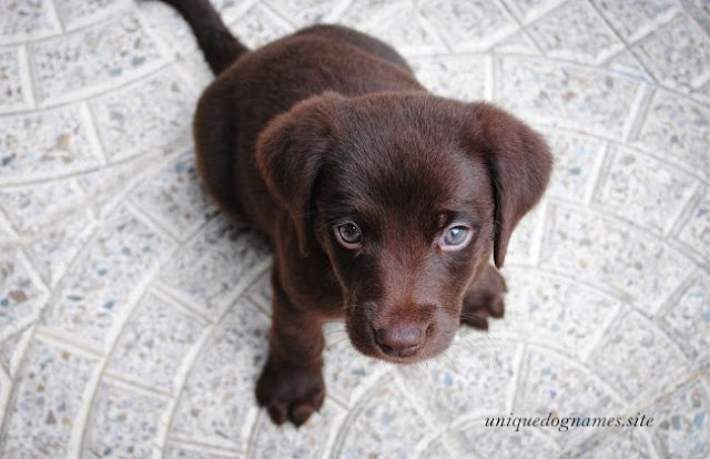 Brown Dog Names,unique Brown Dog Names