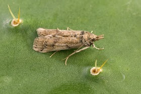 Natural Pest Control Ways For Controlling Moth Infestation