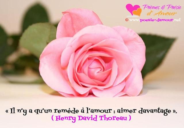 Image d'une jolie fleure avec un beau proverbe d'amour
