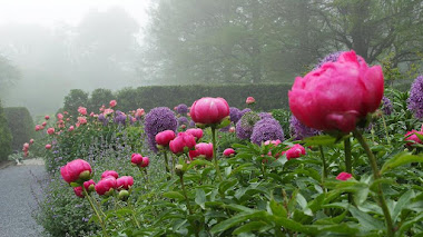 Peony Garden de Longwood, una sala de jardín 'secreta' con algo más que peonías