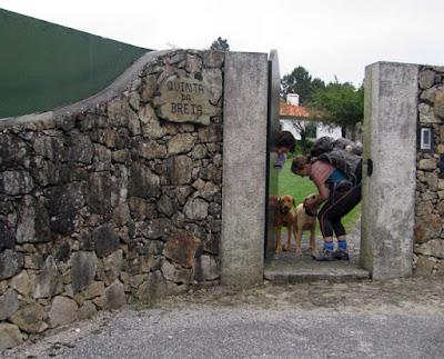 peregrina de santiago a afagar 2 cães