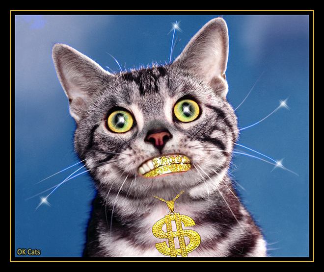 Photoshopped Cat picture • My cat is rich, very very rich, richer than you! His name is 'Dollar', Guess why? [ok-cats-site.com]