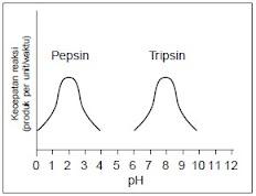 Grafik Hubungan Enzim dan pH