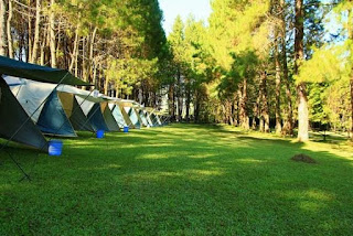 green campus outdoor bandung - pine forest camp
